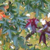 Осенние листья :: Inna Vicente Rivas