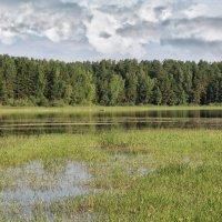 Залив на Обском водохранилище :: Дмитрий Конев