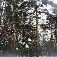 Зимний лес в Котельниках 2017 год. :: Ольга Кривых
