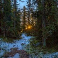 Дремучий лес на рассвете. :: Фёдор. Лашков