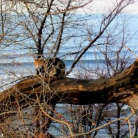 У самого синего моря :: Нина Бутко