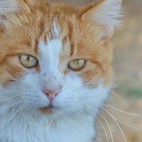 Еще один греческий кот :: Владимир Брагилевский