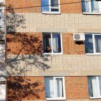 А из нашего окна...красна-девица видна! ) :: ЕВГЕНИЯ