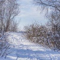 Мороз и солнце :: Игорь Сикорский