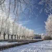 cold winter morning :: Dmitry Ozersky