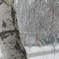 Зима. :: Вячеслав Медведев
