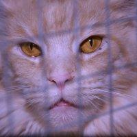 не хочет сидеть в клетке :: Наталия П