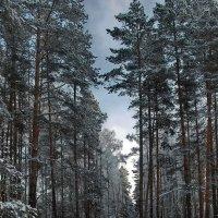 Утих метельный снегопад... :: Лесо-Вед (Баранов)