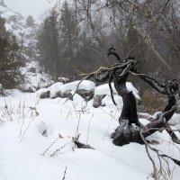 Январь в горах :: Александр Грищенко