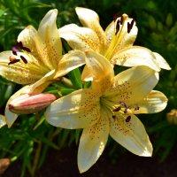 Цветы после дождя. :: Наталья
