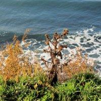 Море в декабре :: Нина Бутко