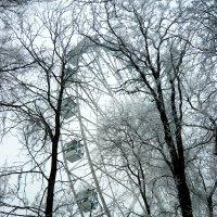 В зимнем парке :: Надежда