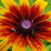 Цветок и букашка :: Андрей Кротов