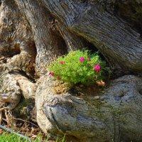 Цветы в дереве. :: Оля Богданович