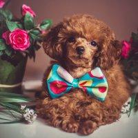 Цветочное настроение! :: Катерина Терновая