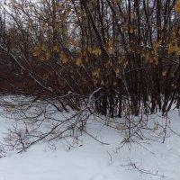 Почти успешная попытка найти цветное :: Андрей Лукьянов