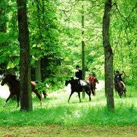 Охота с конями на лисицу :: Kostas Slivskis