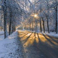 Морозным днем. :: Андрей Олонцев