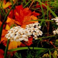 конец октября - последние цветы :: Александр Прокудин