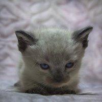 Котенок по имени Гав :: Ирина ***