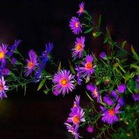 Последние осенние цветы :: Владимир Максимов
