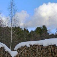 совсем не чёрно-белая зима ) :: Марина Буренкова