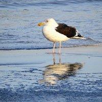 Чайки на море - морская чайка :: Маргарита Батырева