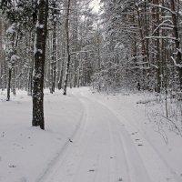 зимняя дорога :: оксана