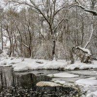 Зима в лесах Калужской области :: Константин Поляков