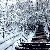 зима :: марина антонова
