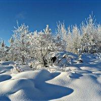 Зимний день в январе :: Leonid Rutov