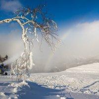 Снежный выстрел :: Артём Удодов