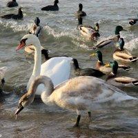 На Центральном пляже Анапы :: Нина Бутко