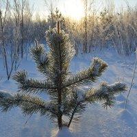На окраине Северодвинска. :: Михаил Поскотинов