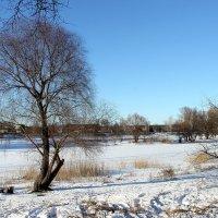 А просто зима...  (Левитанский) :: Валентина ツ ღ✿ღ