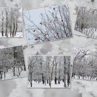 Зима,зарисовки в парке... :: Тамара (st.tamara)