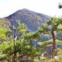 Сочи. гора Большой Ахун :: Елена Павлова (Смолова)