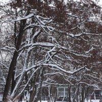 зима... :: kate grayeyed