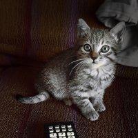 Ну я же лучше телевизора! :: сергей адольфович