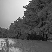 Зимний вечер :: Александр