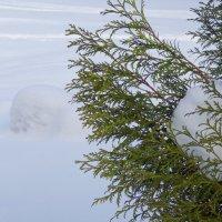 снежки :: Марина Буренкова