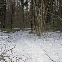 в лесу :: оксана