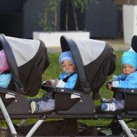 Счастливое семейство :: Мария Самохина