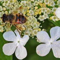 Флора и фауна :: Светлана