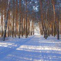 Зимняя дорога через лес. :: Валентина Домашкина