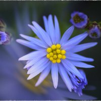 в саду :: Виктор Сосунов