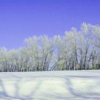 Зимние перелески :: юрий Амосов