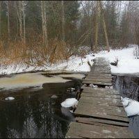Опасный мостик :: Светлана Петошина