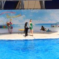 Отдых на море, Крым Дельфинарий Коктебель-30. :: Руслан Грицунь
