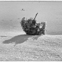 Гонимый ветром :: Елена Миронова